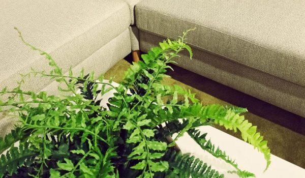 Verbetering van de luchtkwaliteit binnenshuis